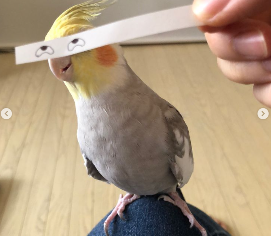 Owner Puts Doodle Eyes On Her Pet Bird And The Results Are Hilarious